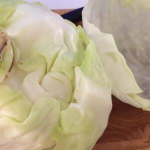 hvidkålsblade kåldolmer2